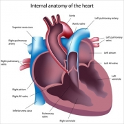 Сердечно-сосудистая диагностика