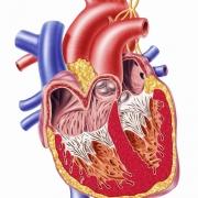 lechenie IBS serdce 0 - Современное лечение ИБС